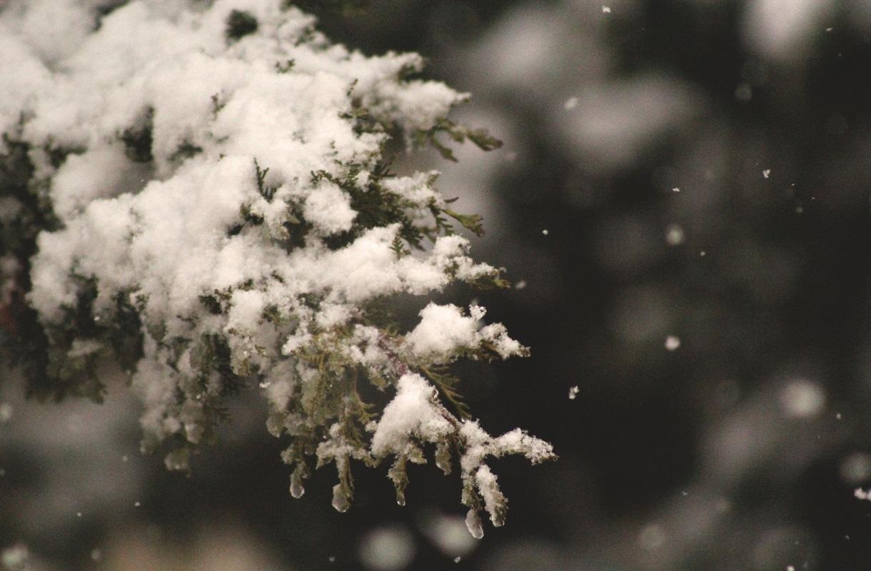 Branch Snow